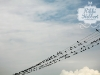 birds-on-a-wire-02