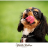 Thumbnail image for Pet Portraiture – The many funny faces of Dexter