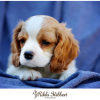 Thumbnail image for Pet Portraiture: Name the new Puppy!