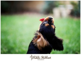 rikki-hibbert-pet-portraiture-dexter-nov-2011-001