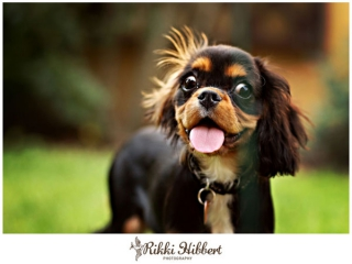 rikki-hibbert-pet-portraiture-dexter-nov-2011-003