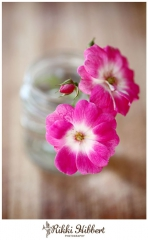 rikki-hibbert-stills-photographer-flowers-01