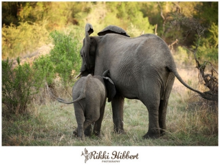 rikki-hibbert-malamala-game-lodge-photography-08
