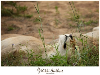 rikki-hibbert-malamala-game-lodge-photography-09