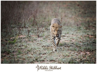 rikki-hibbert-malamala-game-lodge-photography-10