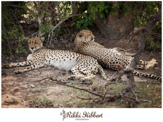 rikki-hibbert-malamala-game-lodge-photography-12