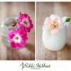 Thumbnail image for Lifestyle Still Life of Flowers