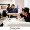 Thumbnail image for TOP Dogs (therapy dogs) at Linmed Hospital 11 July 2012