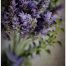 Thumbnail image for Lavender Art Series | Working with Textures
