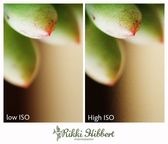 Iso Meaning Photography >> Back To Basics Iso Photography Blog Photographer Tips
